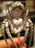 1_spider4.jpg